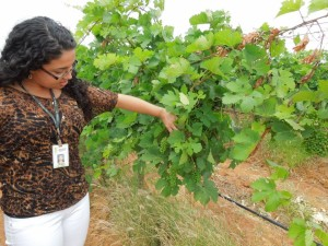 The day after we could do a VIP tour with wine-specialist, Professor of viticulture, and very dear friend of mine -Ana Paula Barros at a vineyard where she worked called Ouro Verde (Green Gold).